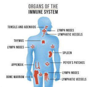 Sistema immunitario e riflessologia plantare