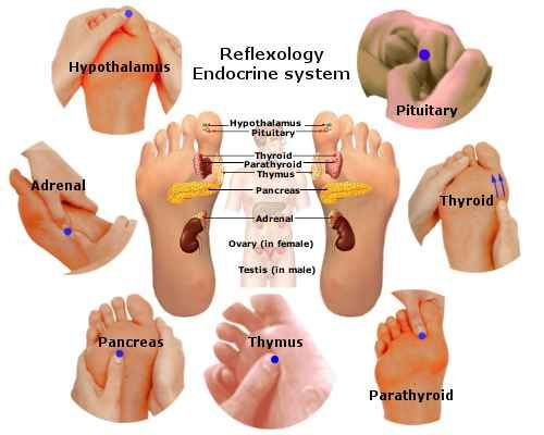 sistema endocrino e causa di artrite reumatoide