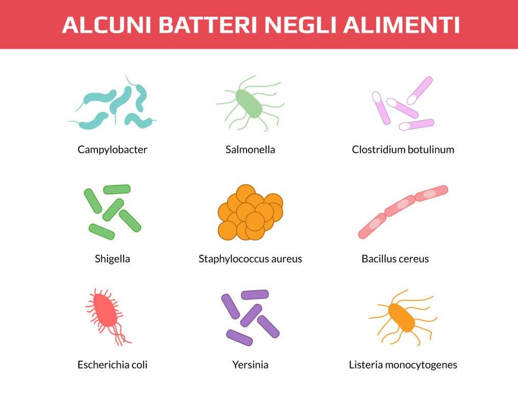 batteri dell'intestino permeanile