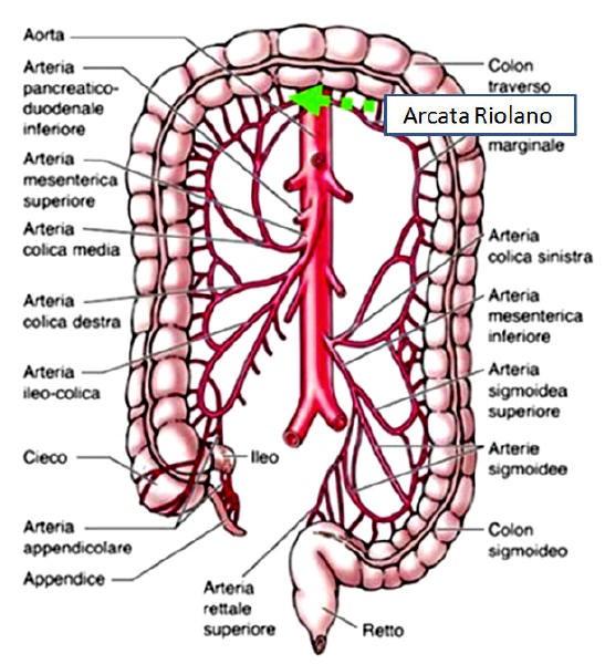 intestino permeabile e vasi arteriosi